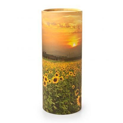 Sunflower Fields Scattering Cylinder